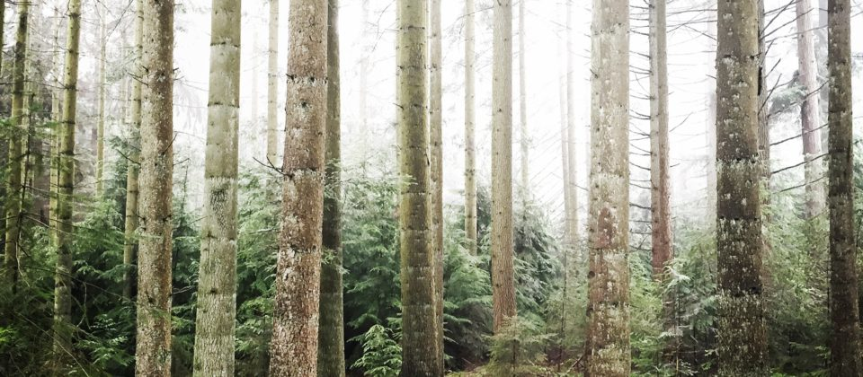 Into tre woods